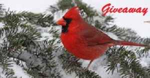 Winter Blog giveaway